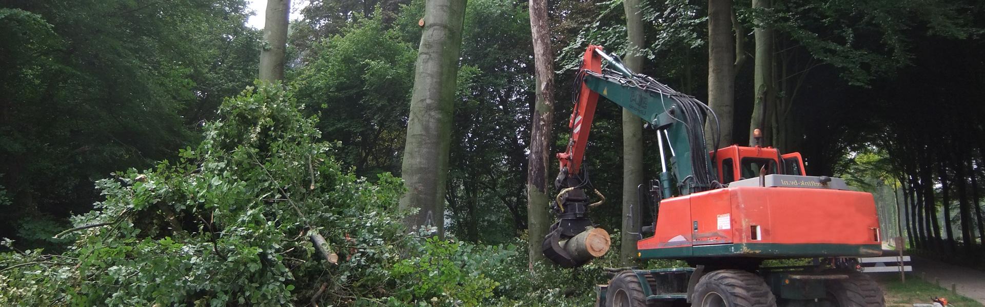 Overhangende takken snoeien - Groenbedrijf Limburg