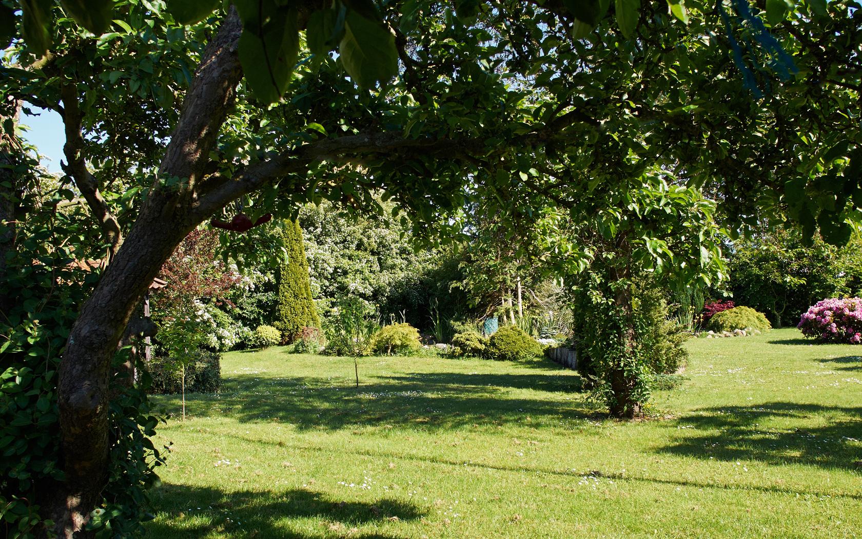 Aankoopadvies planten en bomen - Groenbedrijf Limburg