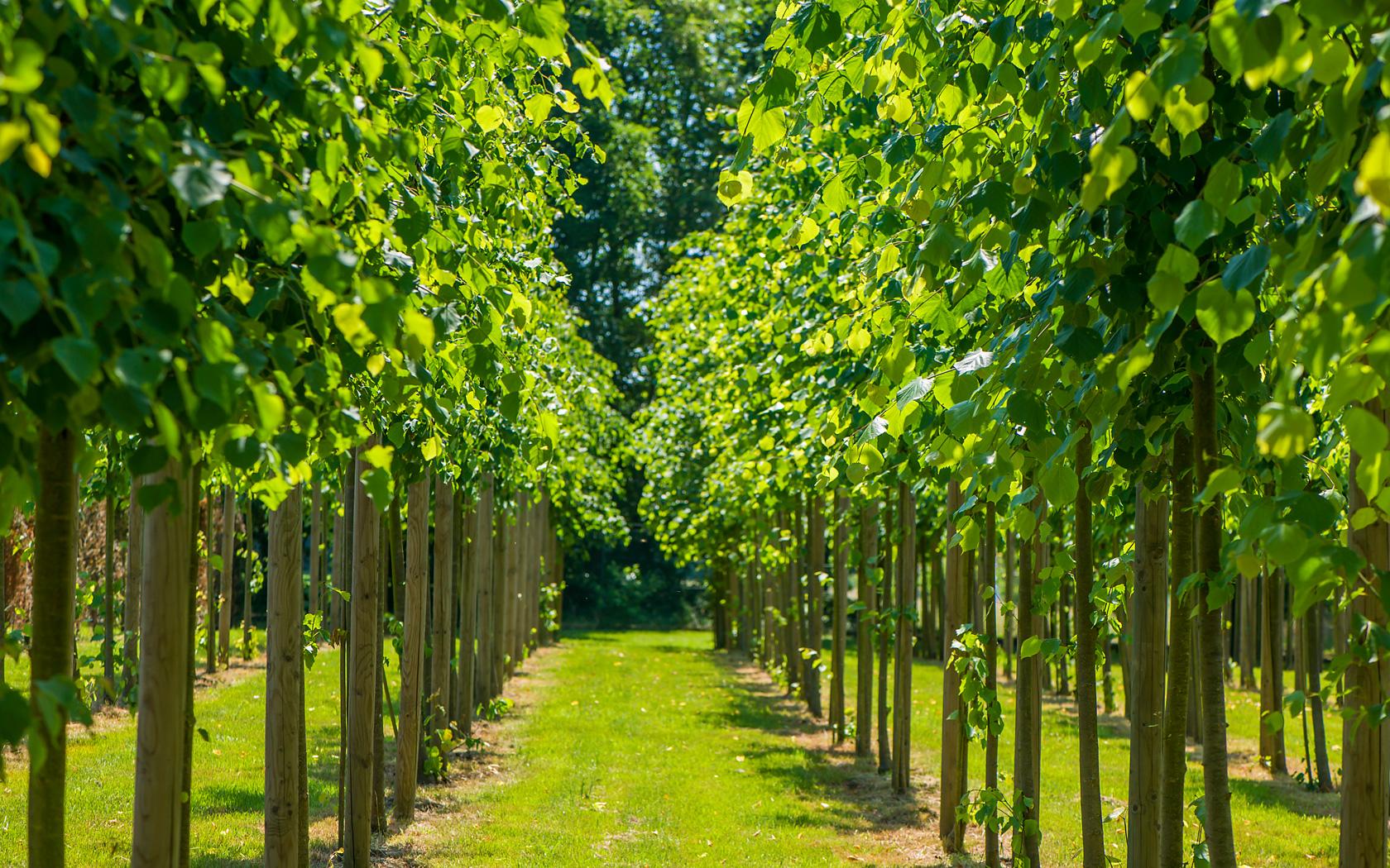 Groenvoorziening - Groenbedrijf Limburg