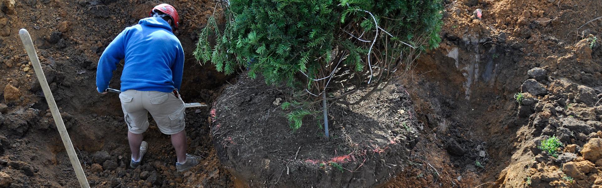 Planten van bomen - Groenbedrijf Limburg