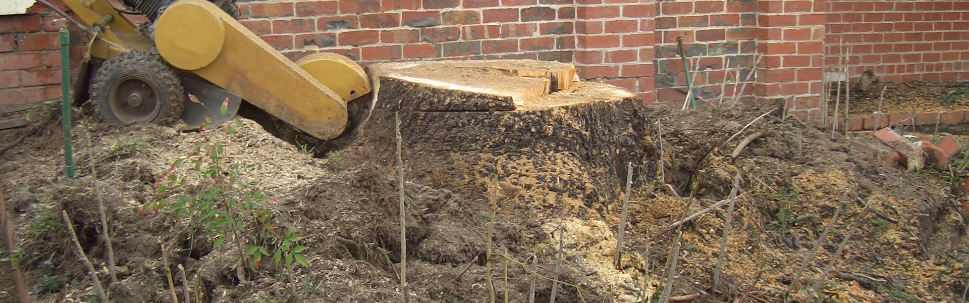 Bomen uitfrezen - Groenbedrijf Limburg