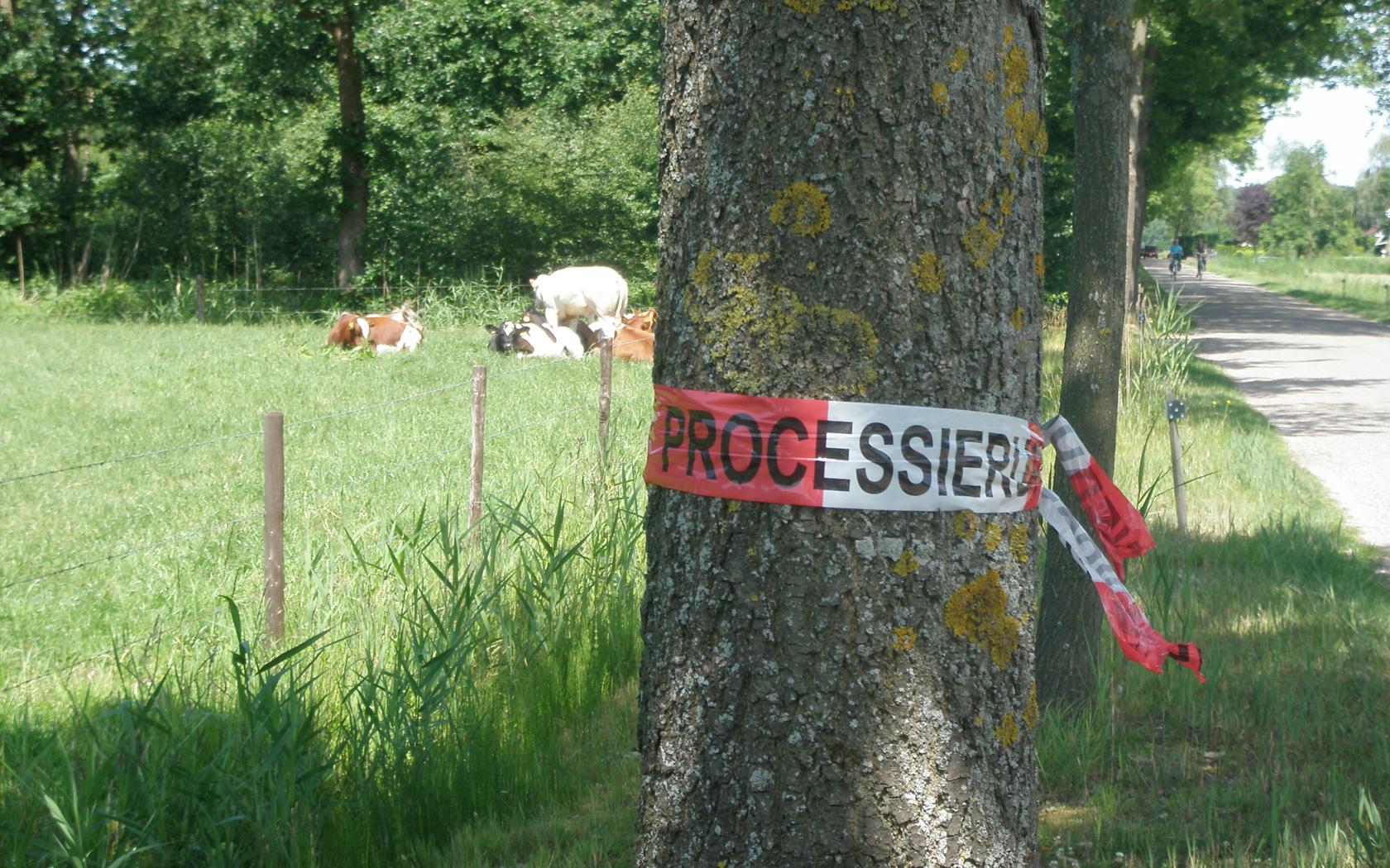 Ziektebestrijding van bomen - Groenbedrijf Limburg