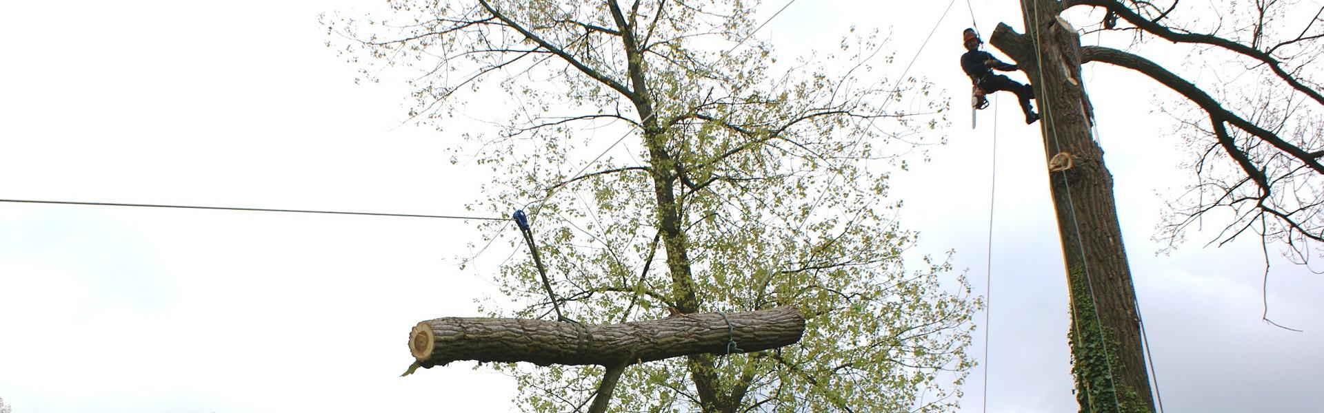 Vellen van bomen - Groenbedrijf Limburg
